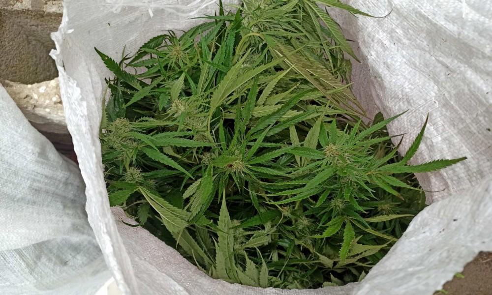 Uhapšen zbog marihuane i keramičkih pločica