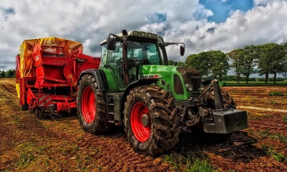 Pšenice i kukuruza za izvoz, više temperature uticale na rod