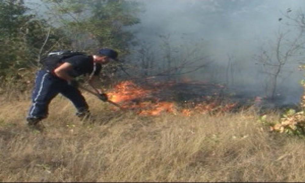 U šumskim požarima strada ceo ekosistem - indirektna šteta deset puta veća od direktne