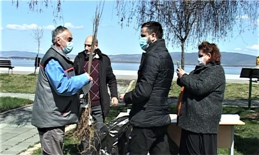 Podeljene sadnice belog jasena građanima  Opštine Golubac u akciji Posadi svoj hlad