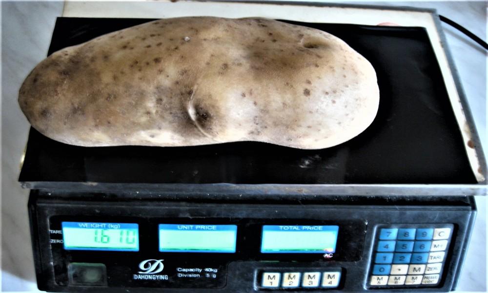 Porodica Sretena Živkovića iz Klenja proizvela krompir za Ginisa
