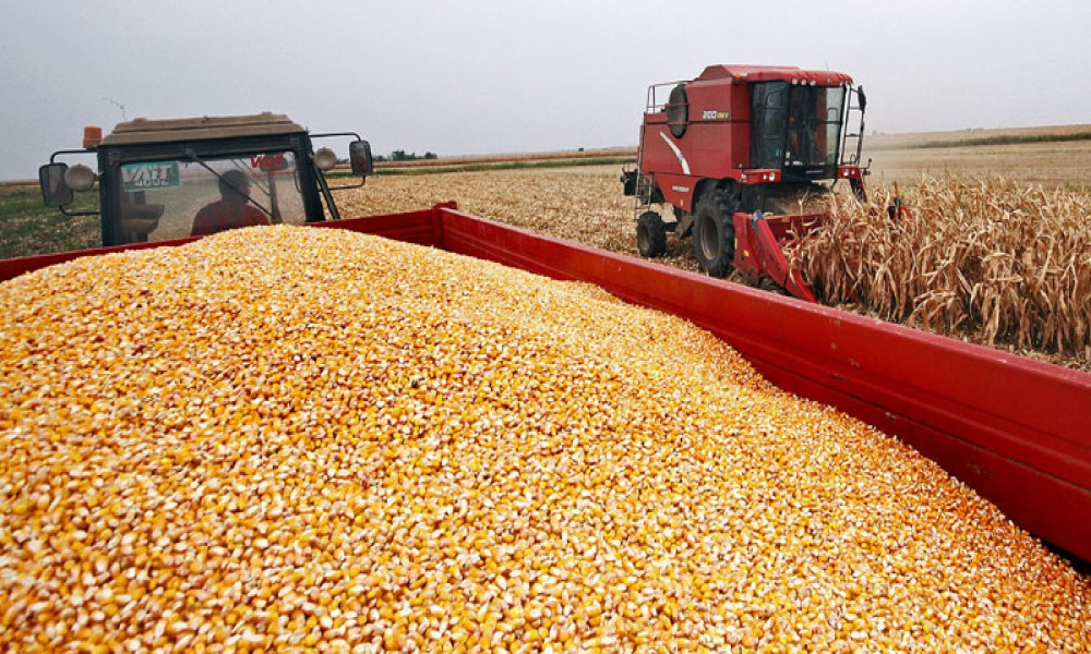 Kako žetva odmiče, i cene soje i kukuruza rastu