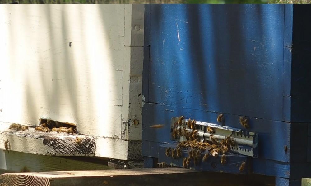Problemi pčelara požarevačkog kraja