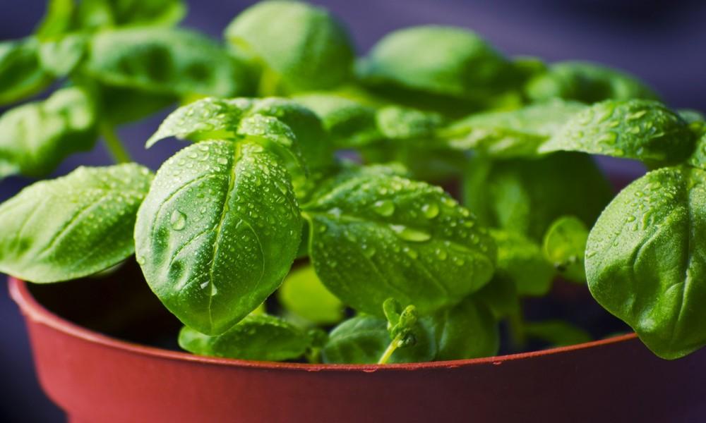 Kuća koja ima ovu biljku ne može da bude siromašna: Čuva zdravlje i privlači novac!