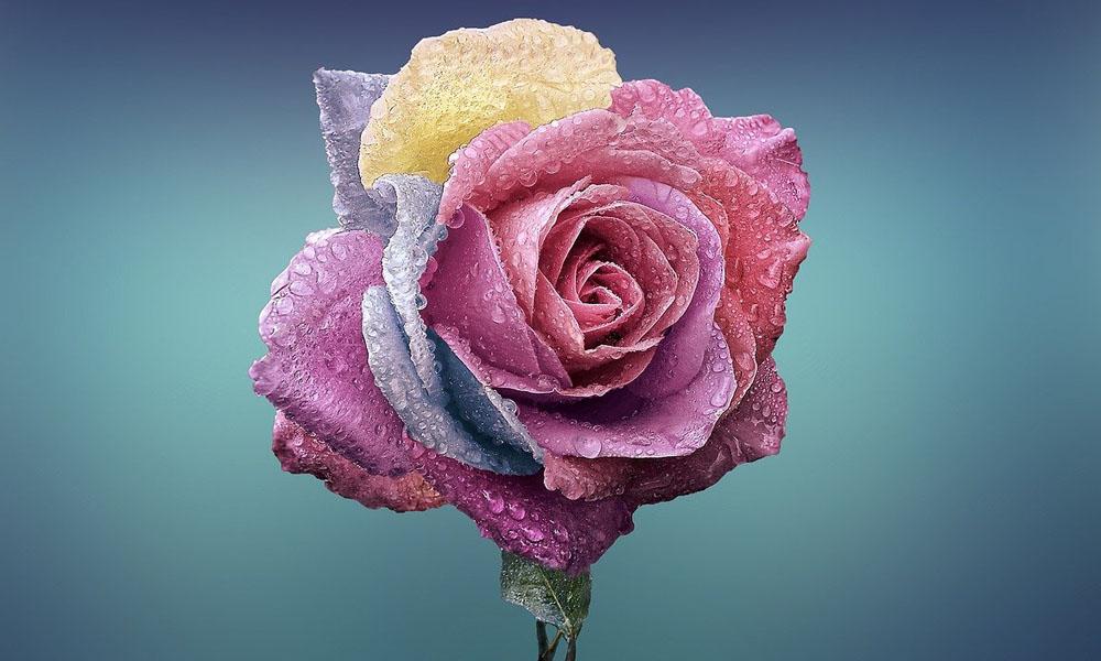 Simbolika cveća: značenje različitih cvetnih vrsta za tužne povode