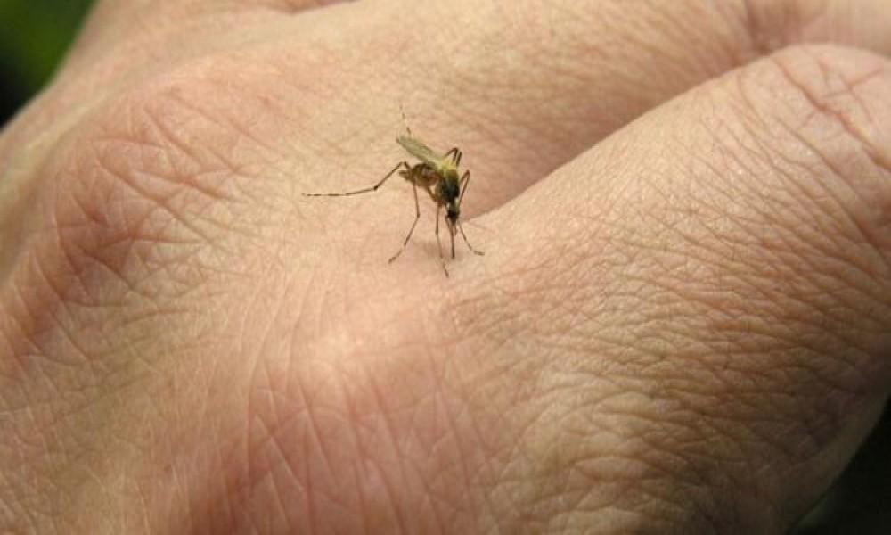 Tretman suzbijanja larvi komaraca