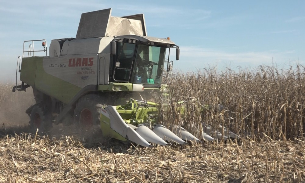 Vršaj kukuruza u toku, kao i setva pšenice