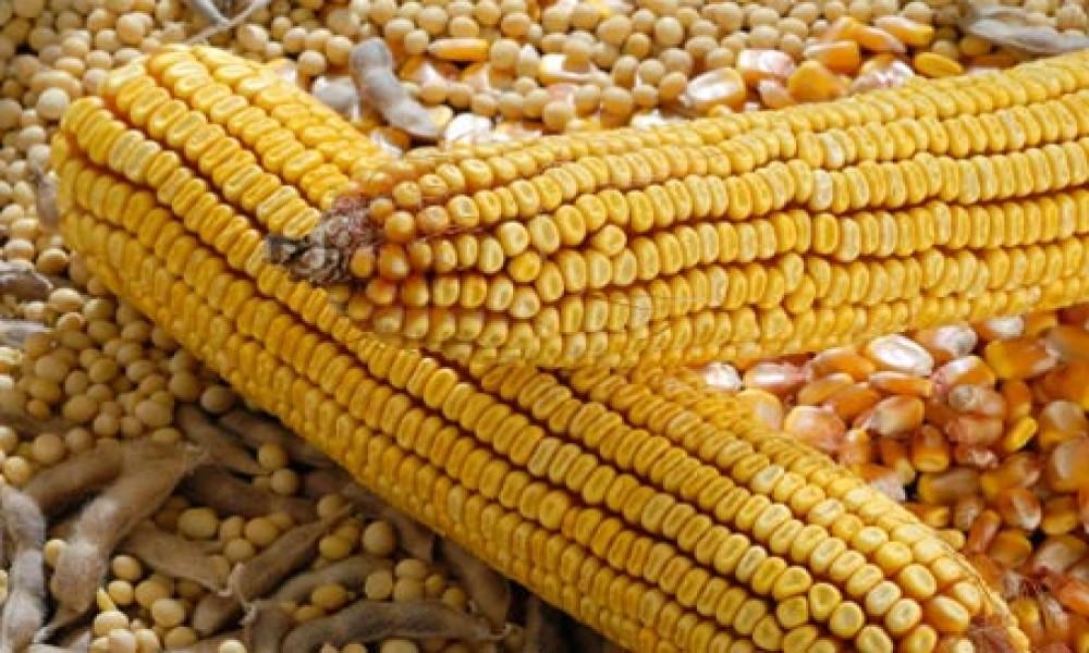 Turbulentna nedelja na tržištu kukuruza