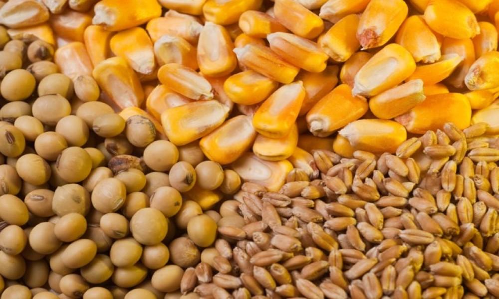 Pad cena žitarica na berzi