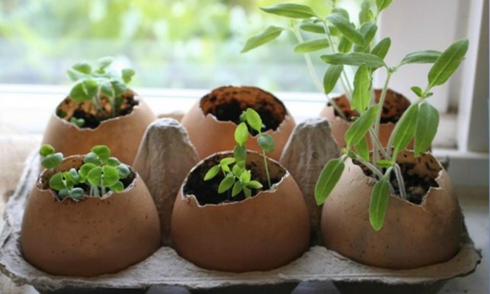 Ne prosipajte vodu u kojoj ste kuvali jaja Evo sjajnog razloga zašto!