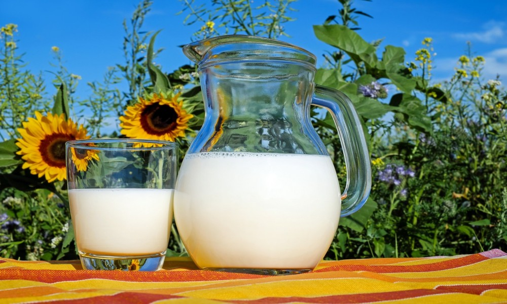 Muke srpskih stočara  mleko gotovo pet puta jeftinije od nafte