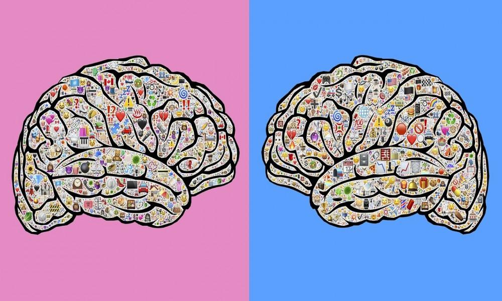 Razlike izmedju muškog i ženskog mozga