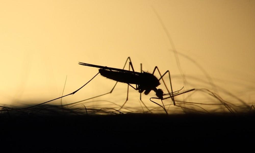 Suzbijanje krpelja i larvi komaraca u četvrtak u Požarevcu