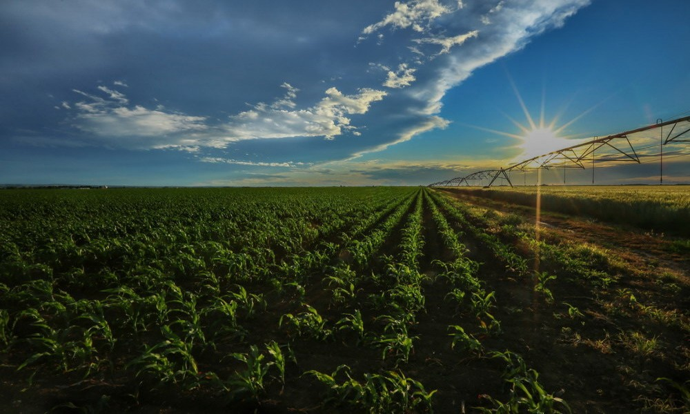 Vlada usvojila uredbu za 53 milijardi dinara subvencija u poljoprivredi