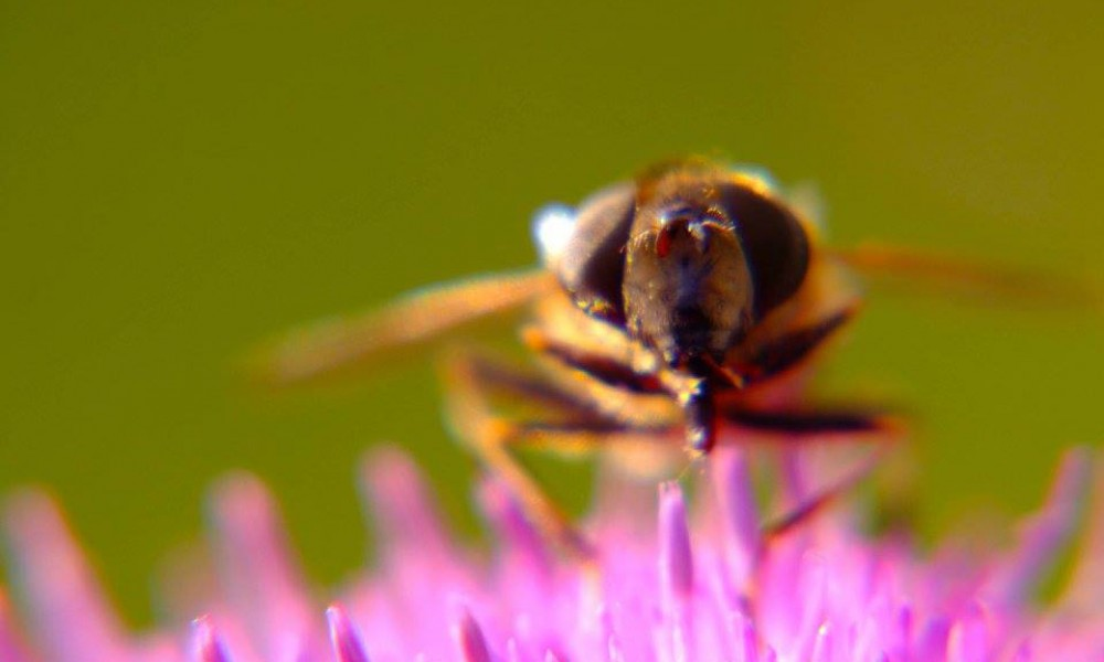 PRVO MESTO PČELARIMA BRANIČEVSKOG OKRUGA