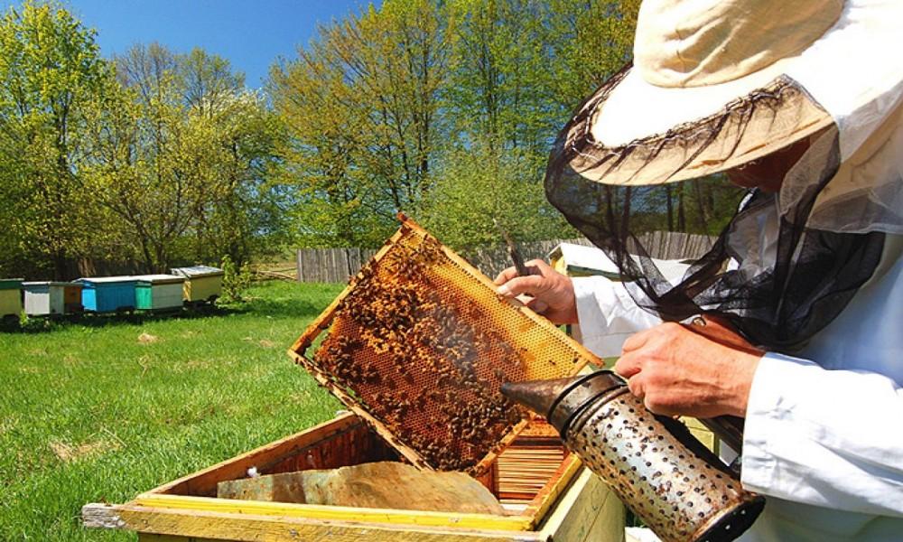Nestašica meda, a kako je pčelama ?