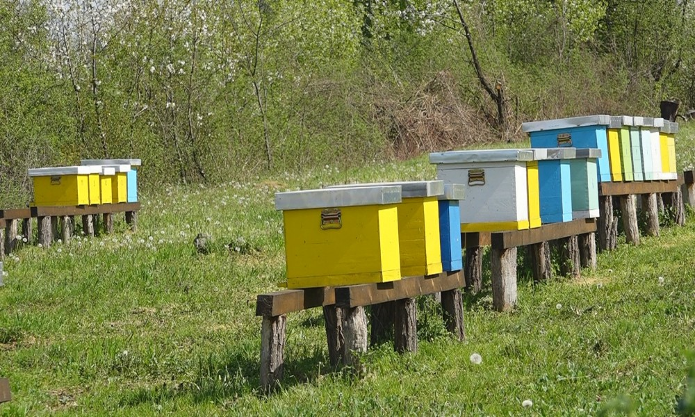 AKTIVNOSTI UDRUŽENJA PČELARA POŽAREVAC: USKORO IX MEĐUNARODNO  SAVETOVANJE U KOSTOLCU