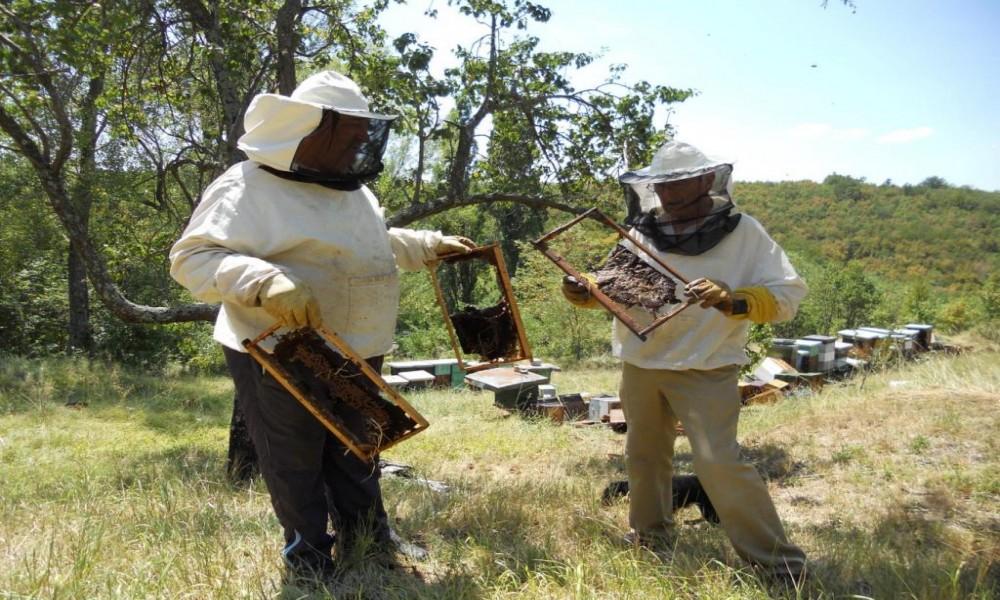 PČELARI PROGLASILI ELEMENTARNU NEPOGODU