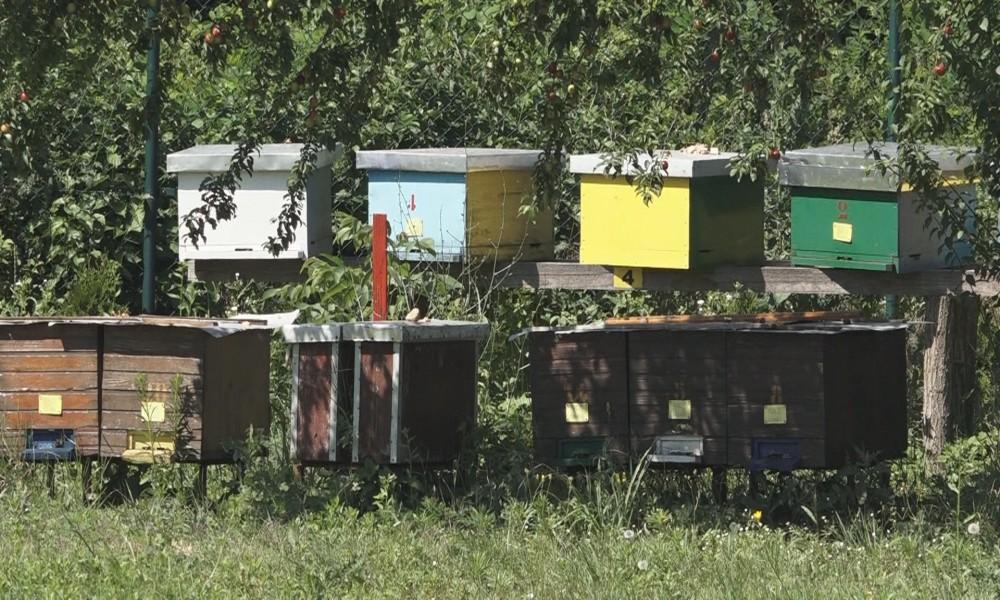 LOŠA GODINA ZA PČELARE PRINOSI MEDA SLABI