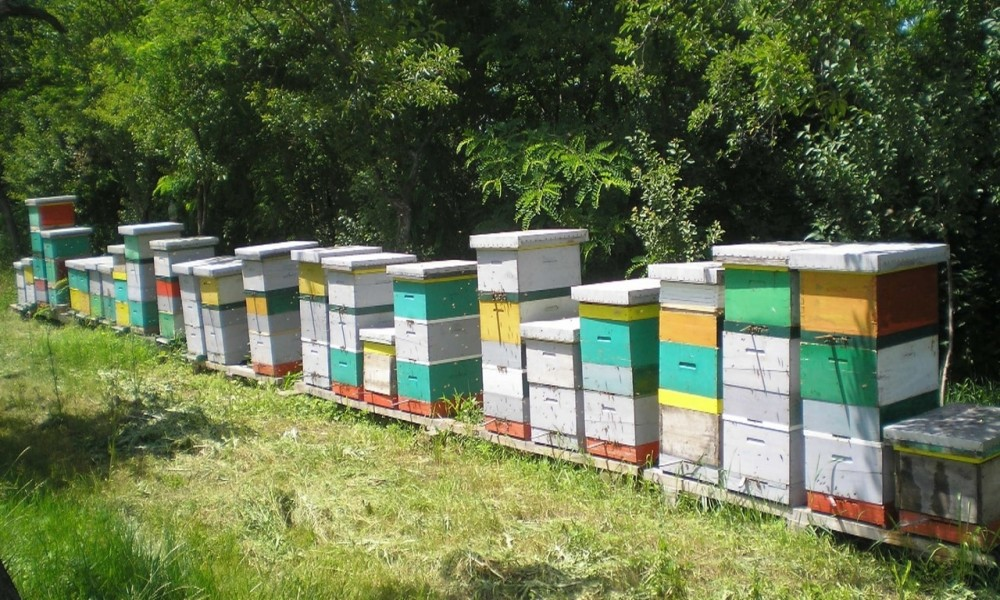 U NEDELJU U KOSTOLCU VII MEĐUNARODNO SAVETOVANJE PČELARA