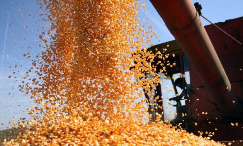 Od izvoza kukuruza najviše para