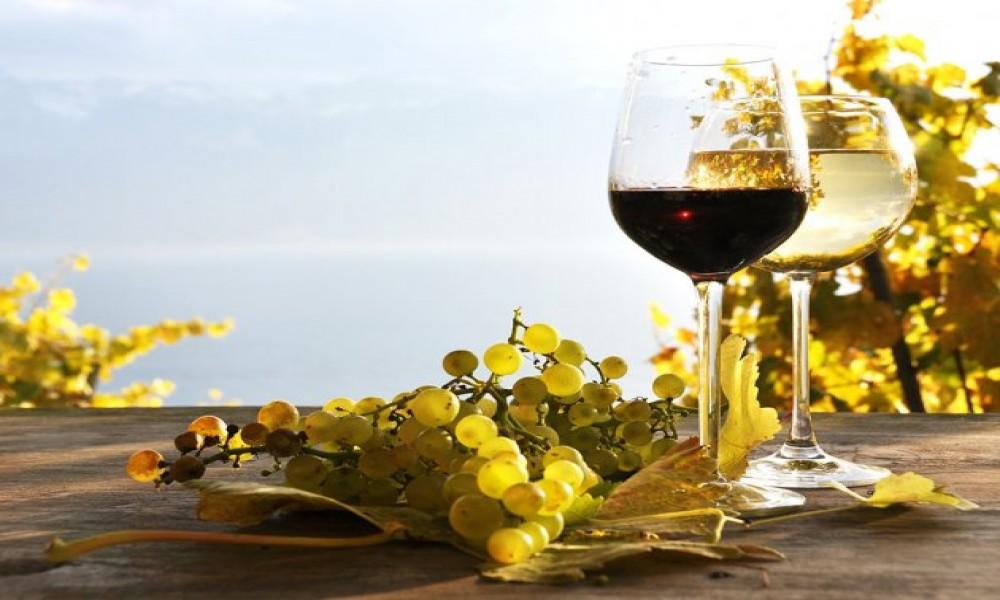 Usavršava se zakon koji će regulisati oblast vinarstva u Srbiji