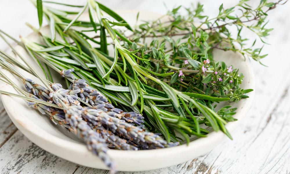 Lekovito bilje koje morate imati u kući